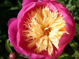 SunPod Garden blog